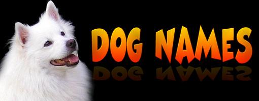 Top 100 Popular Dog Names at warnacat.com
