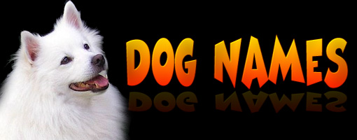 Top 100 Most Popular Dog Names